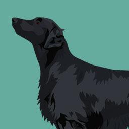 Comportement canin niveau 5