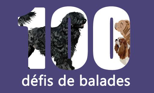 100 défis de balades canines