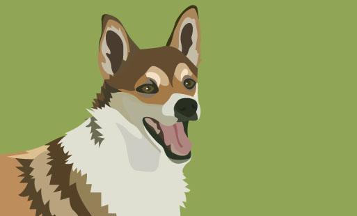 La bientraitance et le chien