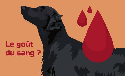 Un chien qui a goûté au sang ...