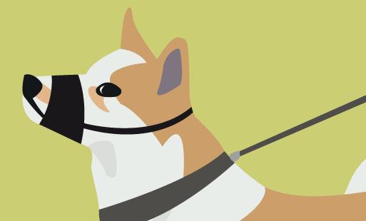 Courir avec son chien ? Ok, mais pas avec ça !