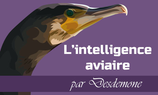 Intelligence aviaire
