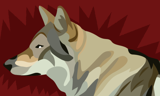Analyse de vidéo : une meute de loup attaque