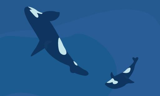 Réflexion autour des orques