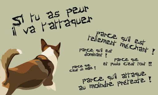 Petites notes sur le comportement canin – n°1