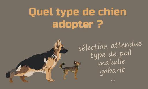 Quel type de chien adopter ?