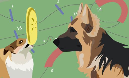 Quel est le meilleur sport canin ?