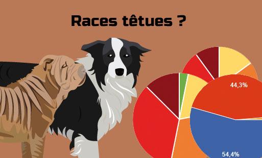 Quelles sont les races de chiens têtus ?