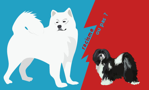 Les chiens peuvent-ils être racistes ?