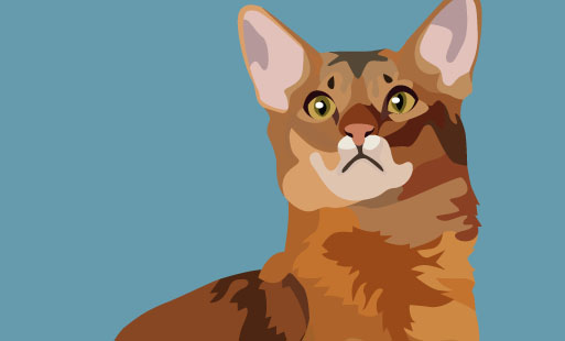 Les différentes morphologies de chats