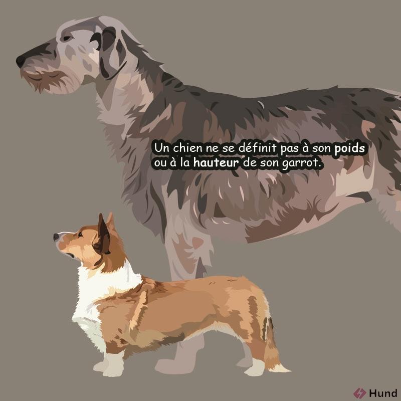 chien définition