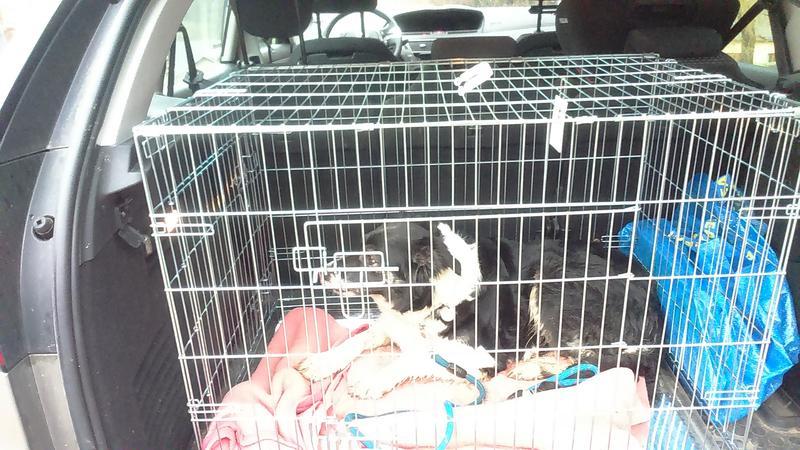 faire de longs trajets en voiture avec un chien vos conseils page 3. Black Bedroom Furniture Sets. Home Design Ideas