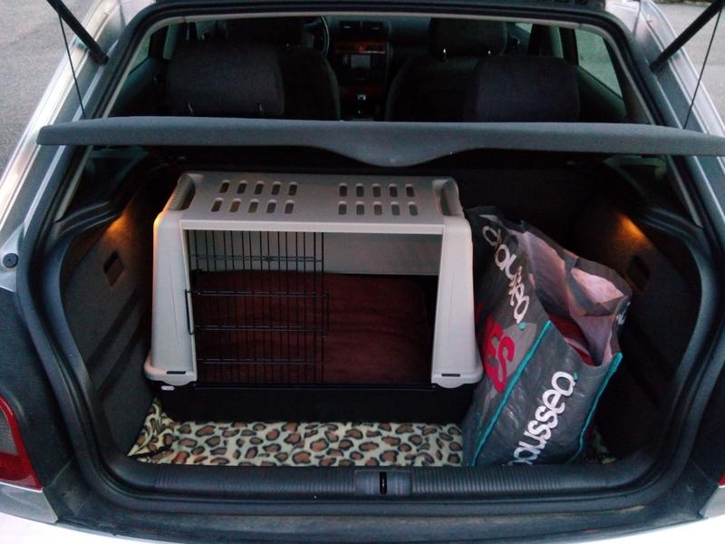 faire de longs trajets en voiture avec un chien vos conseils. Black Bedroom Furniture Sets. Home Design Ideas