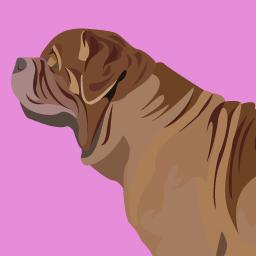 Le chien et les idées reçues 4