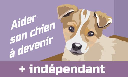 Aider son chien à devenir plus indépendant