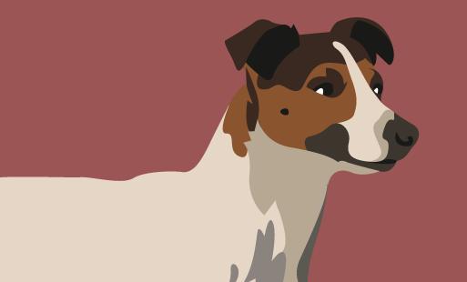 Que faire avec un chien têtu ?