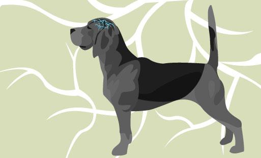 Epilepsie canine