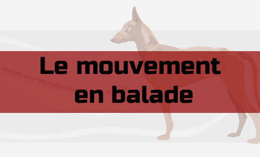 Le mouvement en balade