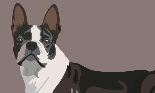 De quelle race est mon chien ?