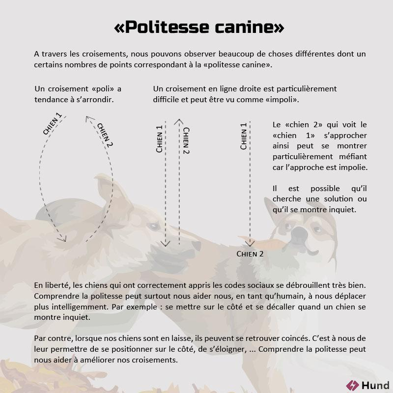Croisement politesse canine