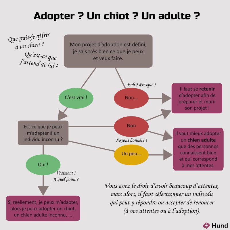 adopter chiot