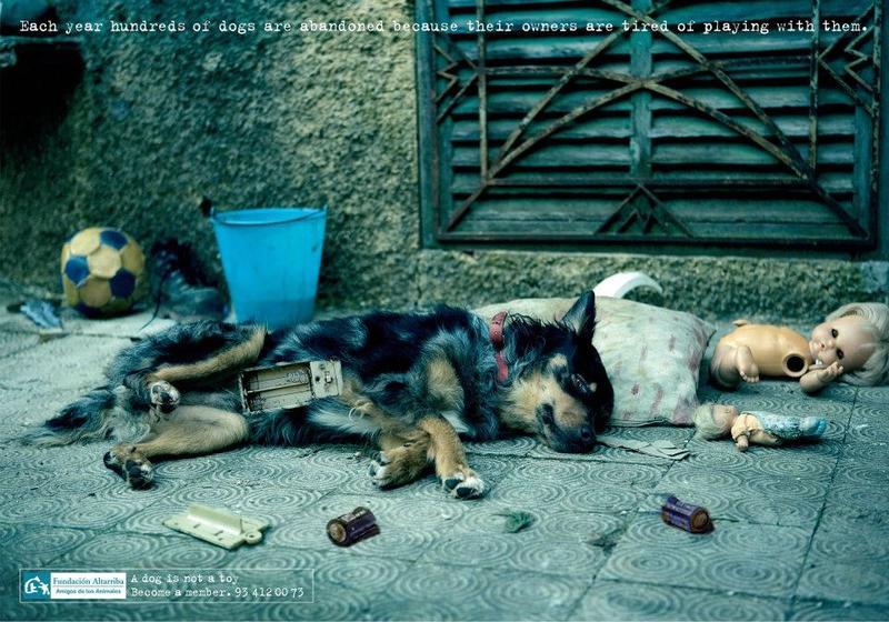 Abandon chien