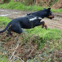 Elle adore faire des sauts plus ou moins improbab…