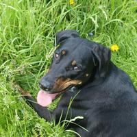 Haï Olly posée dans l'herbe