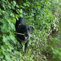 Petite photo en bord de ruisseau avec Haï Olly