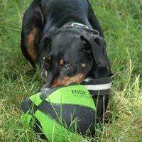 Haï Olly et les ballons, une histoire d'amour !