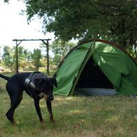 Haï Olly découvre les joies du camping !